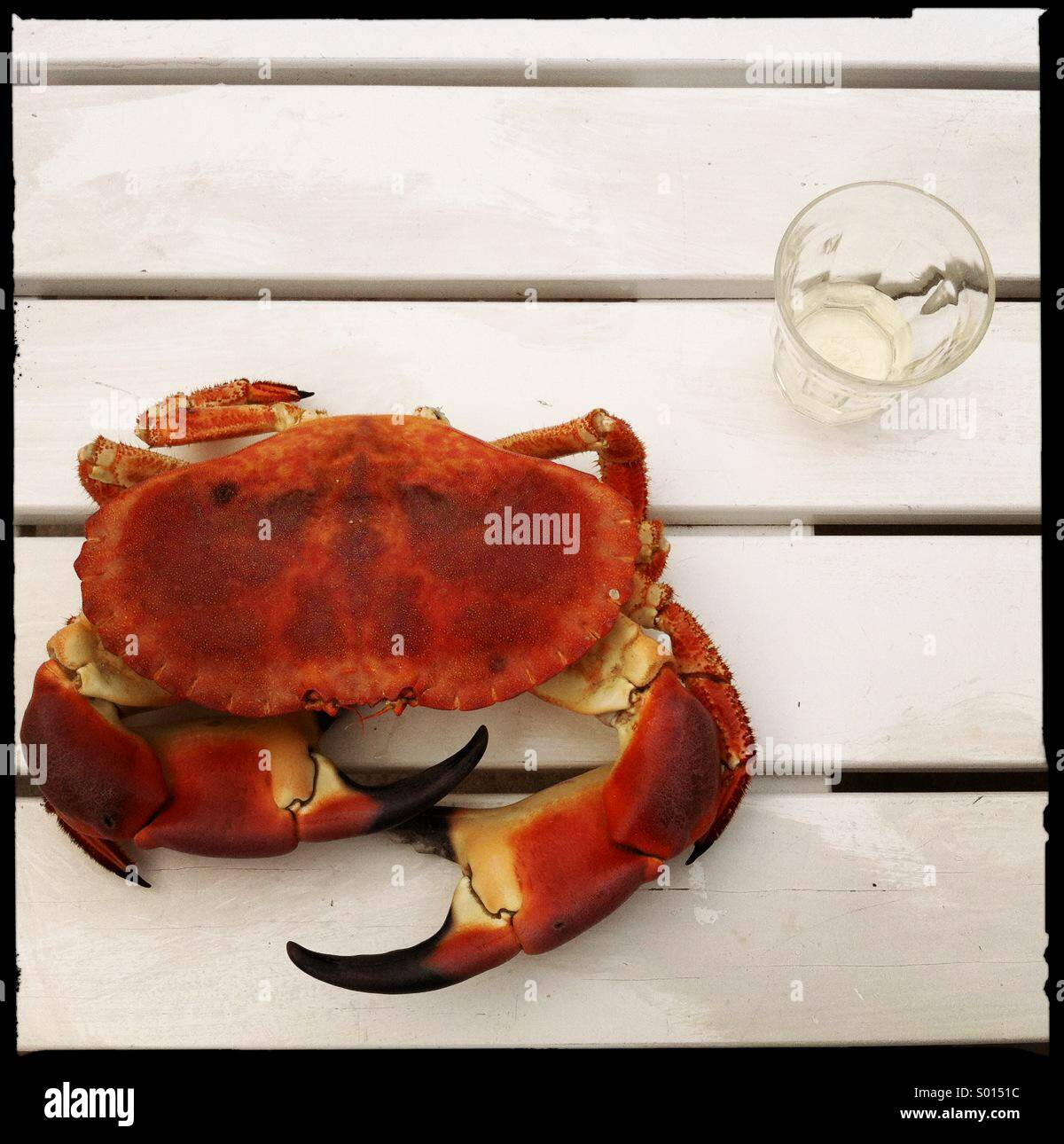 a crab and glass of wine - Stock Image