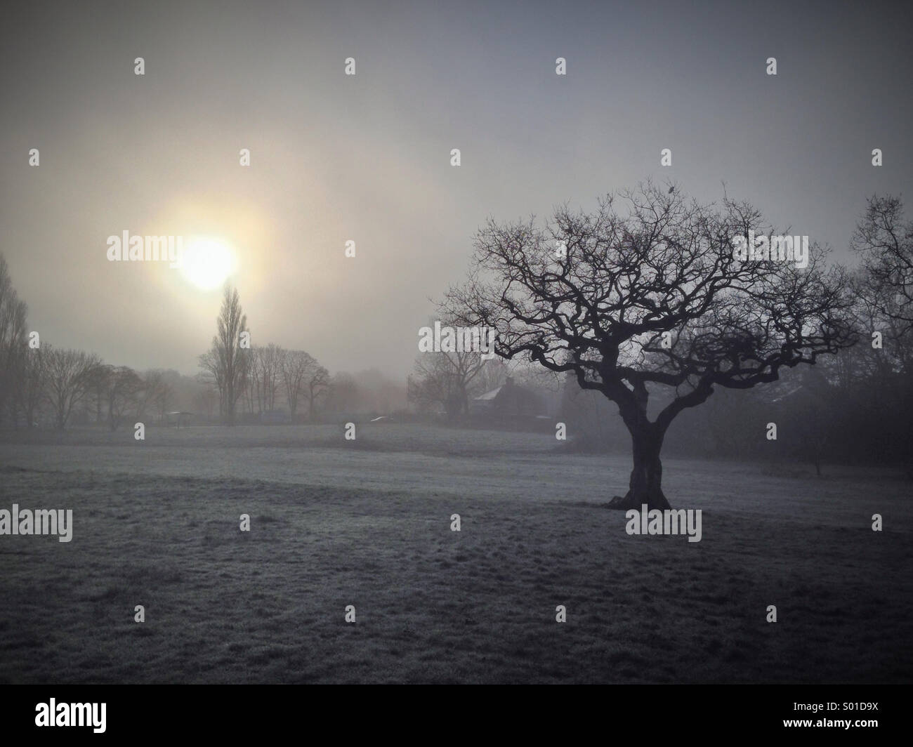 Misty morning with the sun burning off the fog and a line tree against the sky - Stock Image