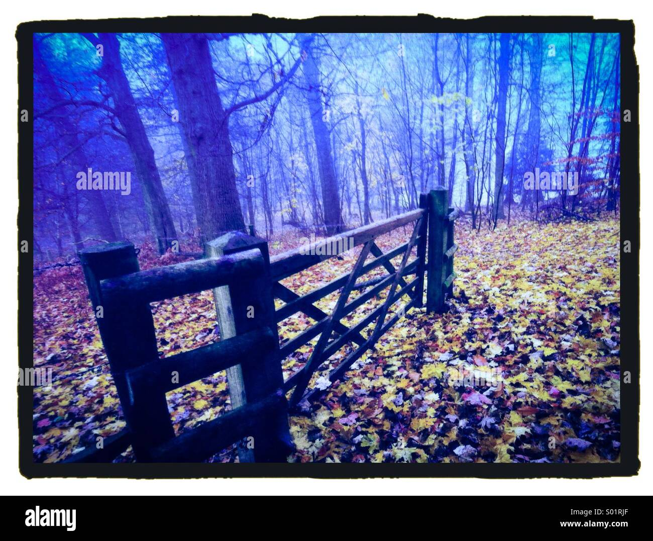 Autumnal wood with gate - Stock Image