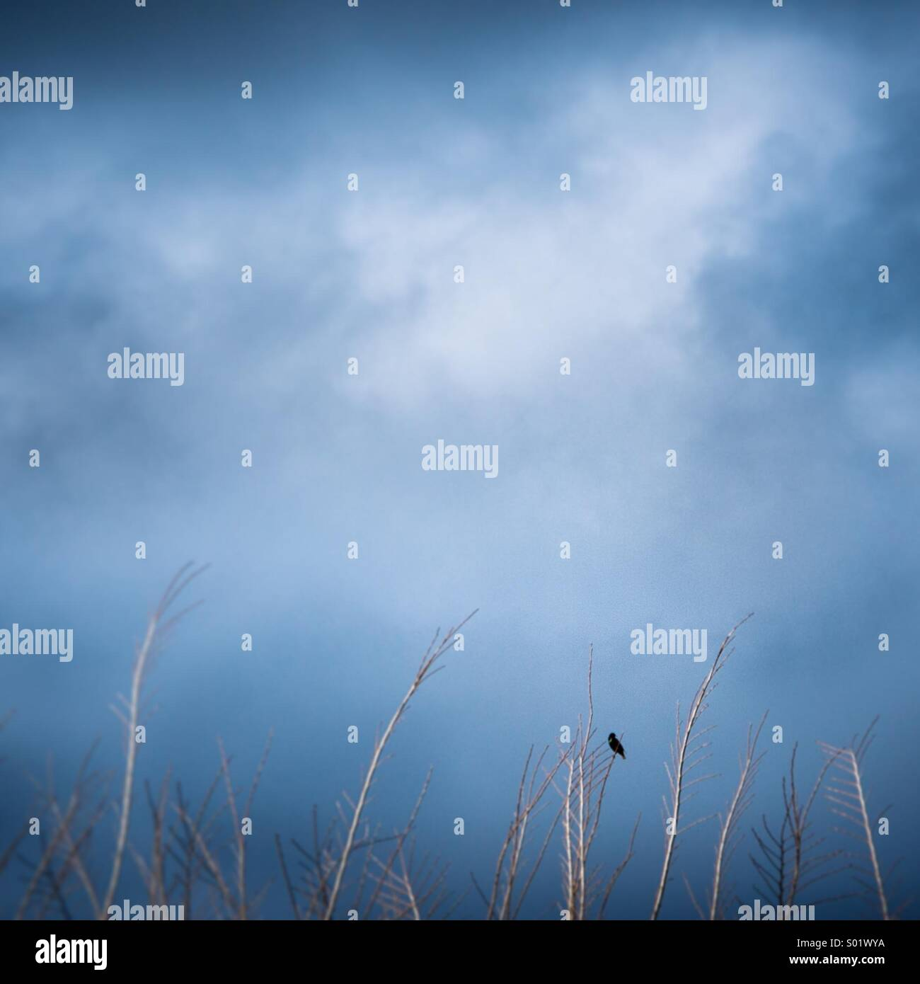 A bird rests on a tree branch under stormy skies. - Stock Image