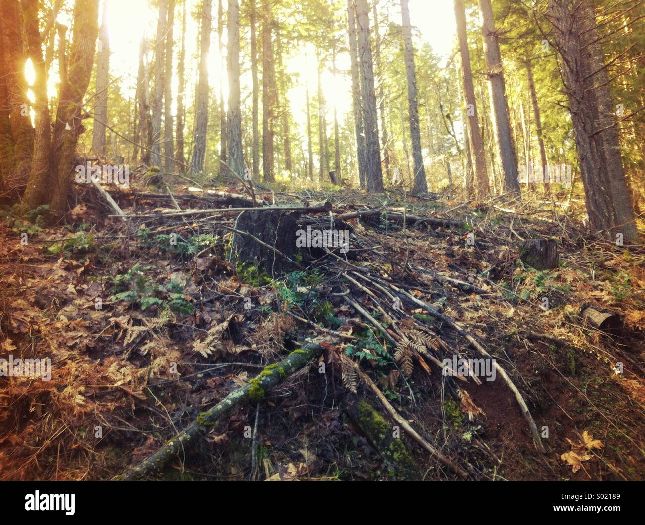 Clearing in forest - Stock Image