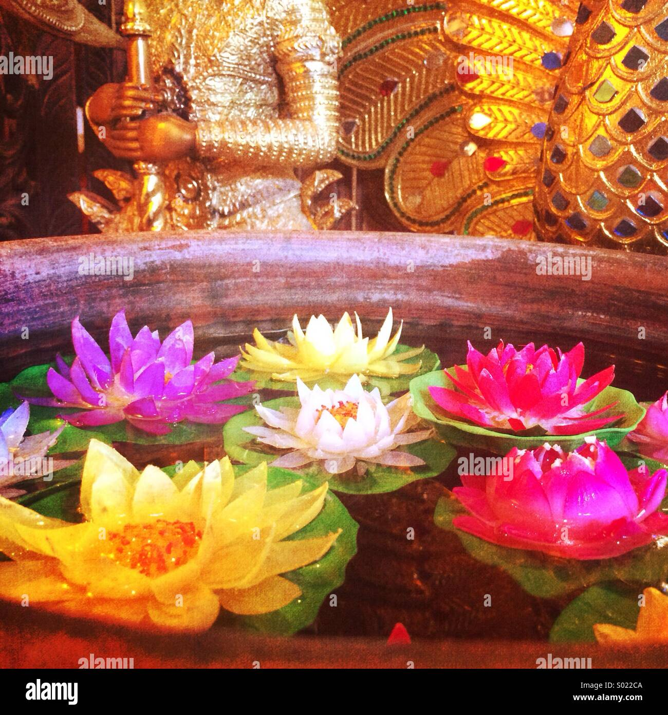 Colorful lotus flowers float in water in front of golden asian stock colorful lotus flowers float in water in front of golden asian figurines mightylinksfo Images