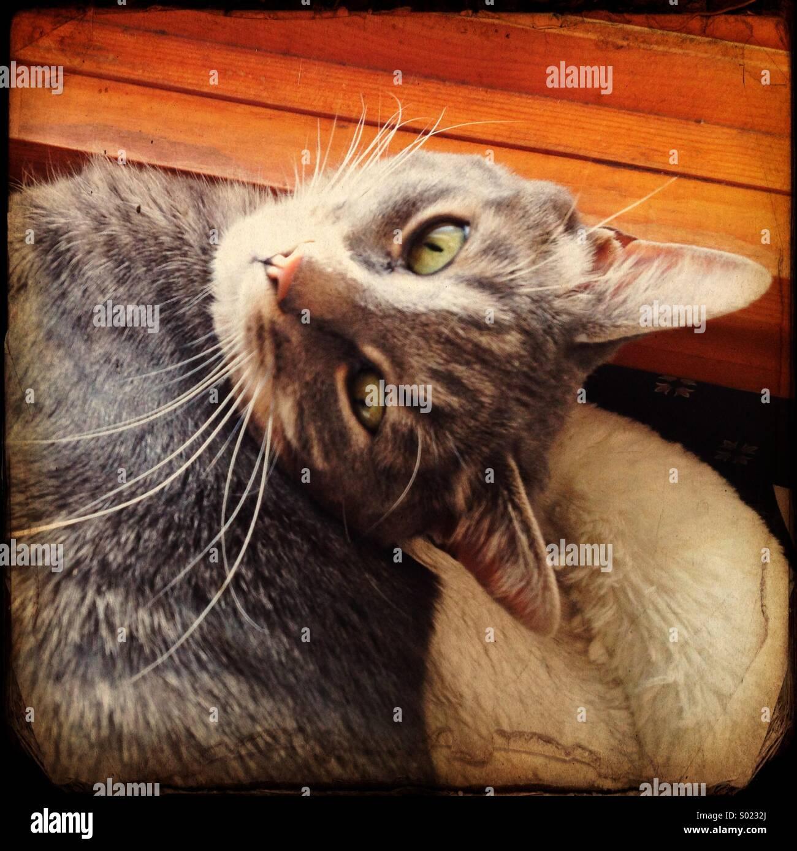 Gray tabby cat. - Stock Image