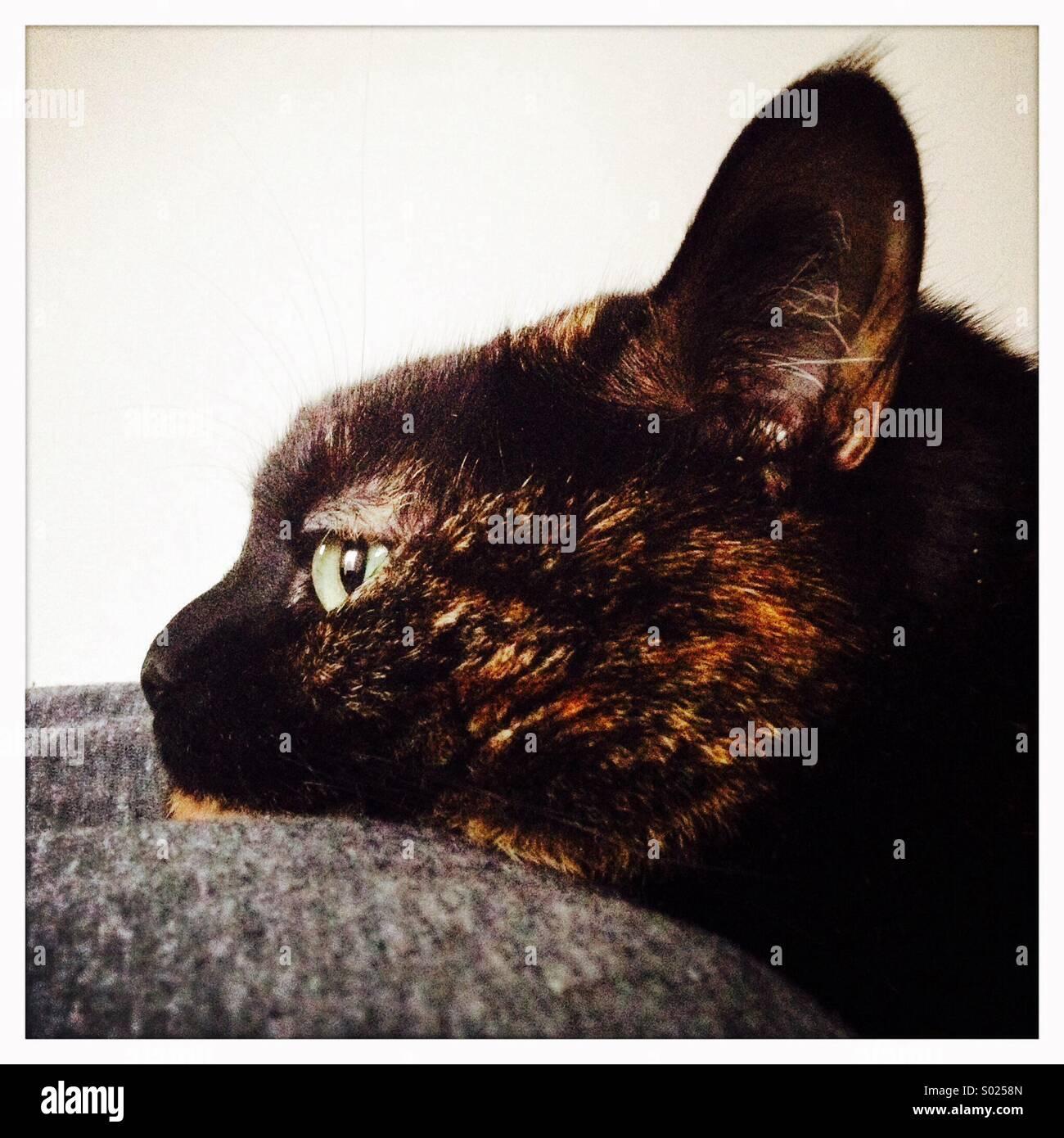 Cat resting Head - Stock Image