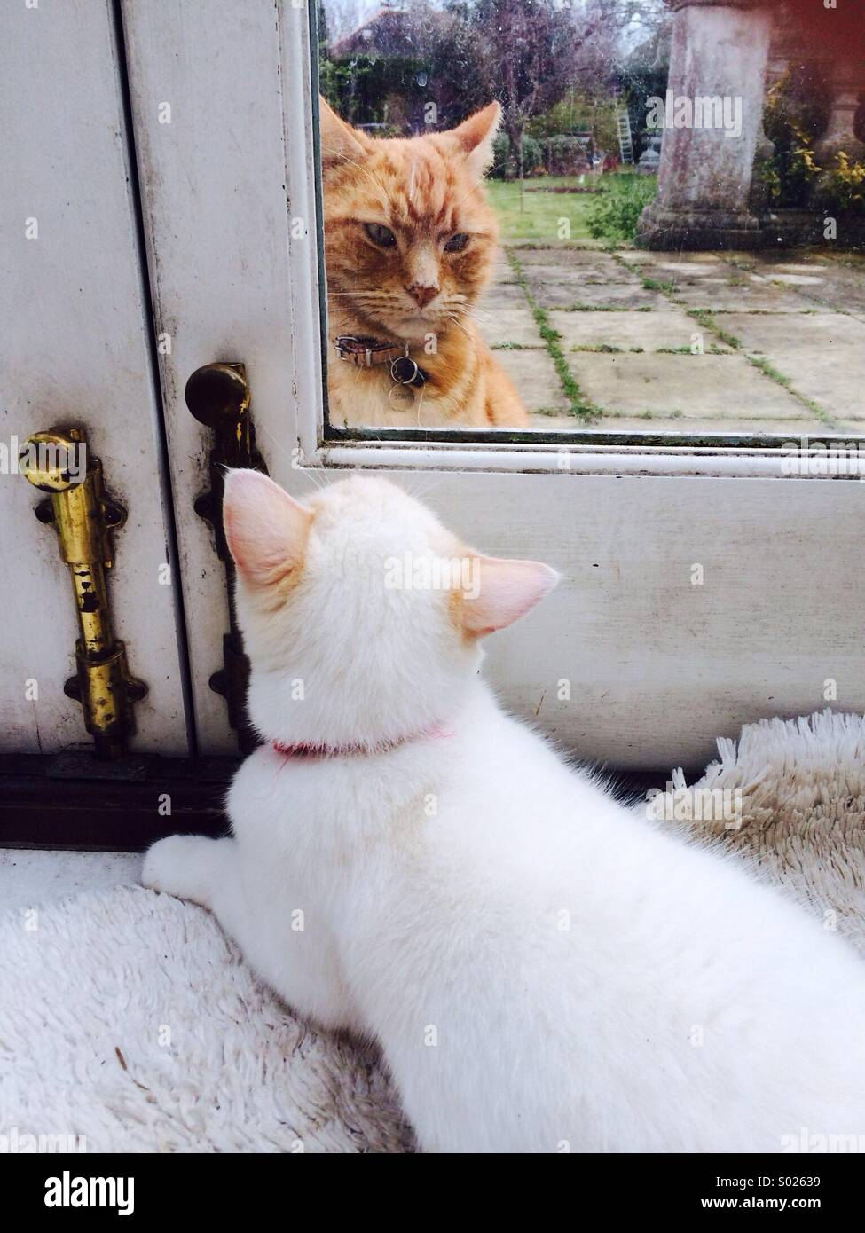 Visitor at the door inside cat and outside cat - Stock Image