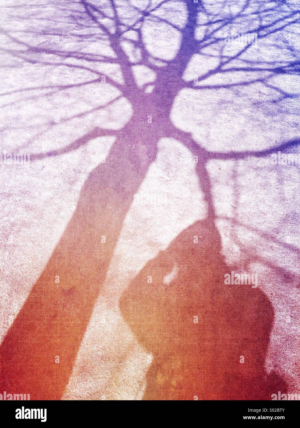 Photographer and tree shadow. - Stock Image