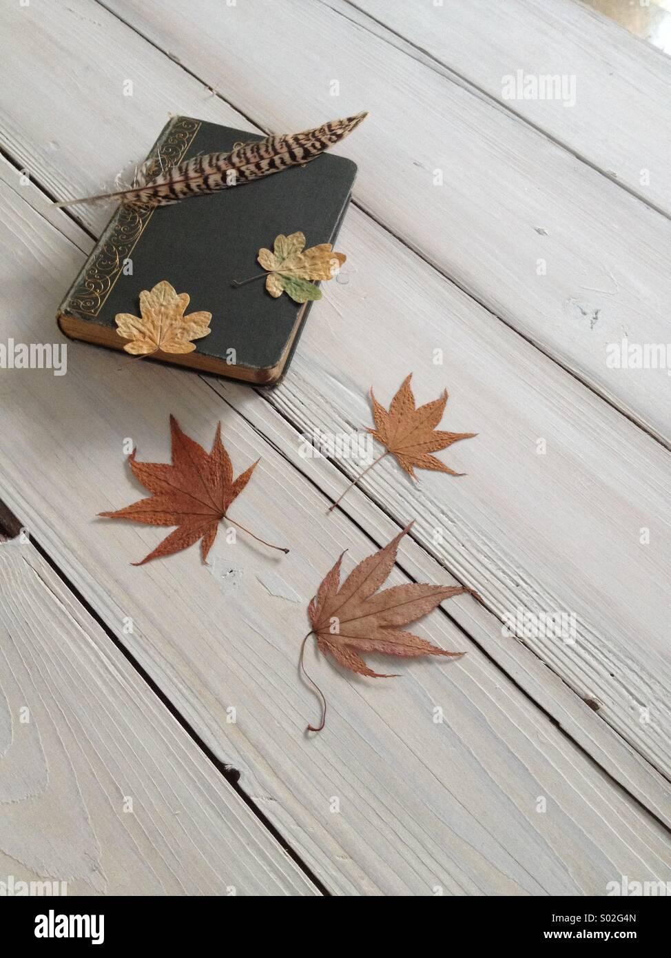 Autumn vignette - Stock Image