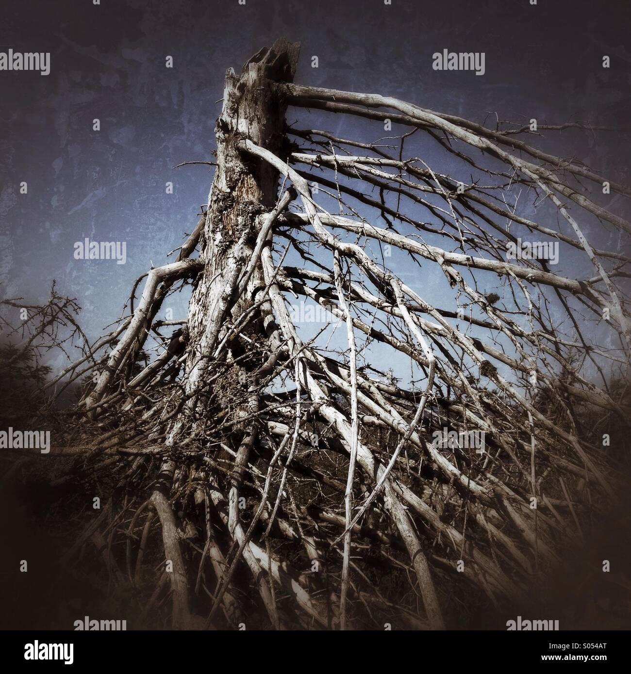 Dead tree - Stock Image