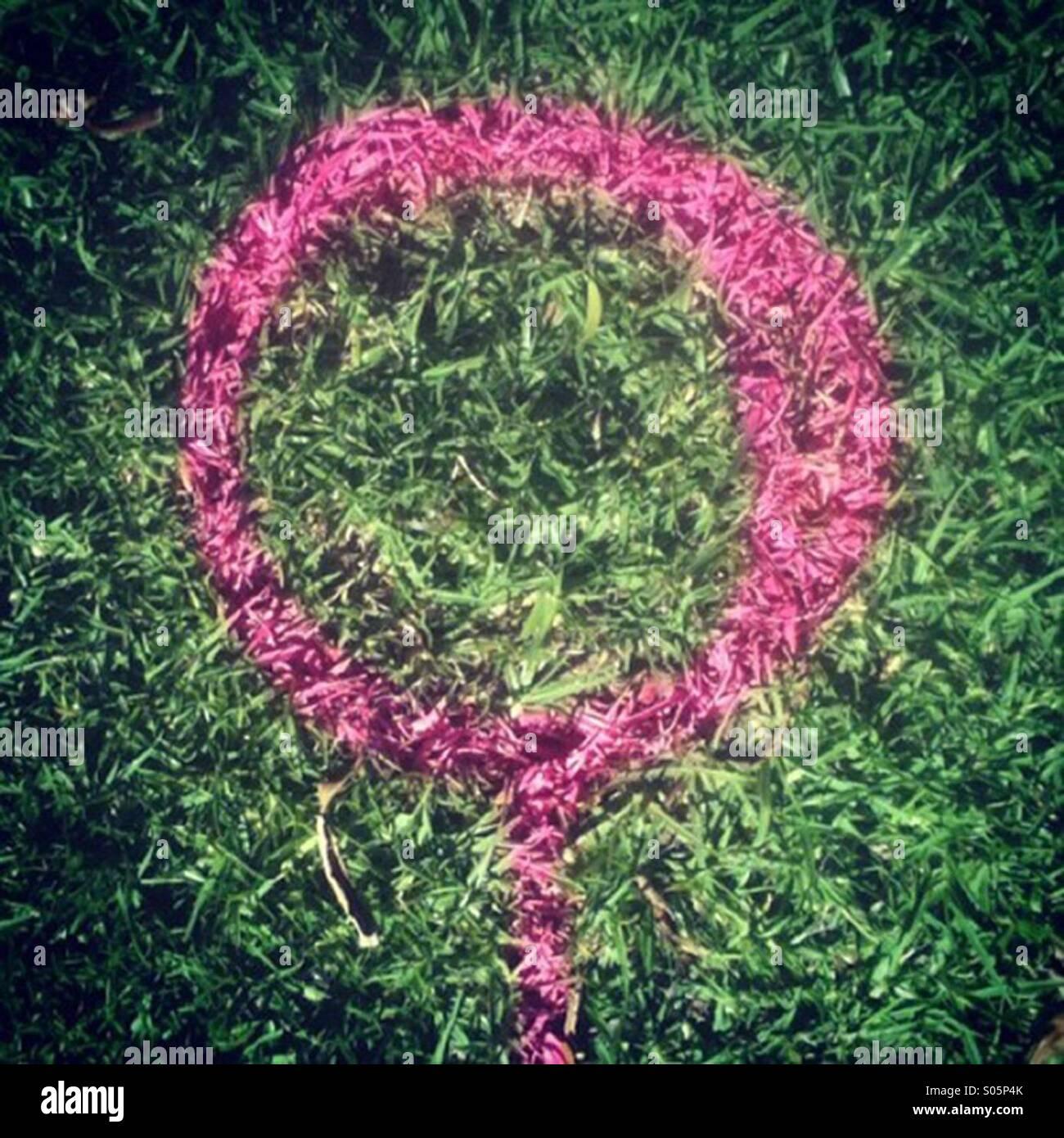 Purple marking on grass - Stock Image