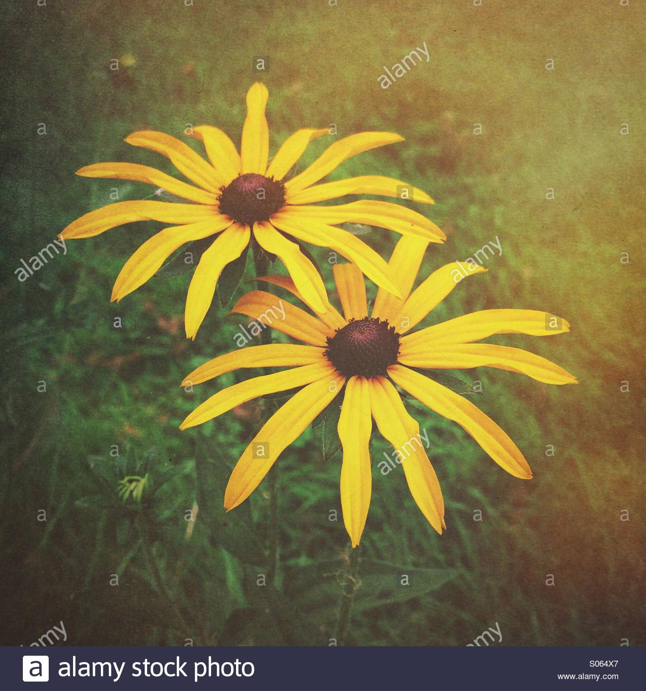 Close up of yellow flowers - Stock Image