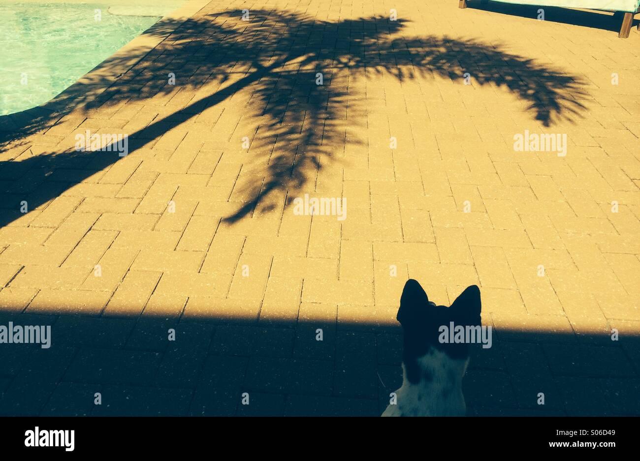 Palm tree reflection - Stock Image