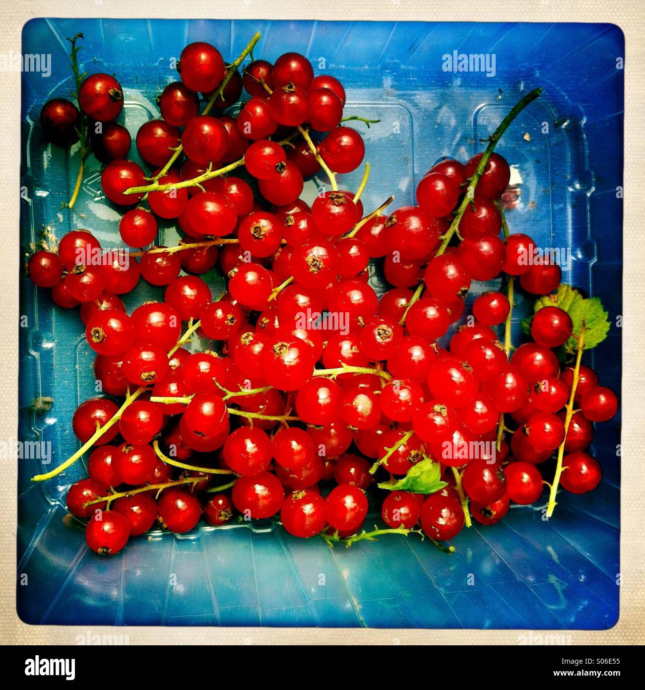 Luscious red currants - Stock Image