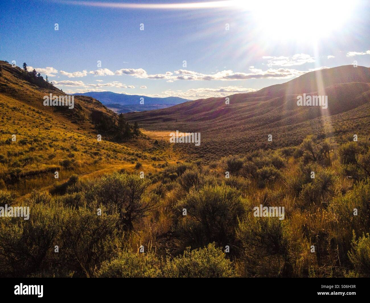 Desert valley; the golden colours of late summer glisten in the evening sun. - Stock Image