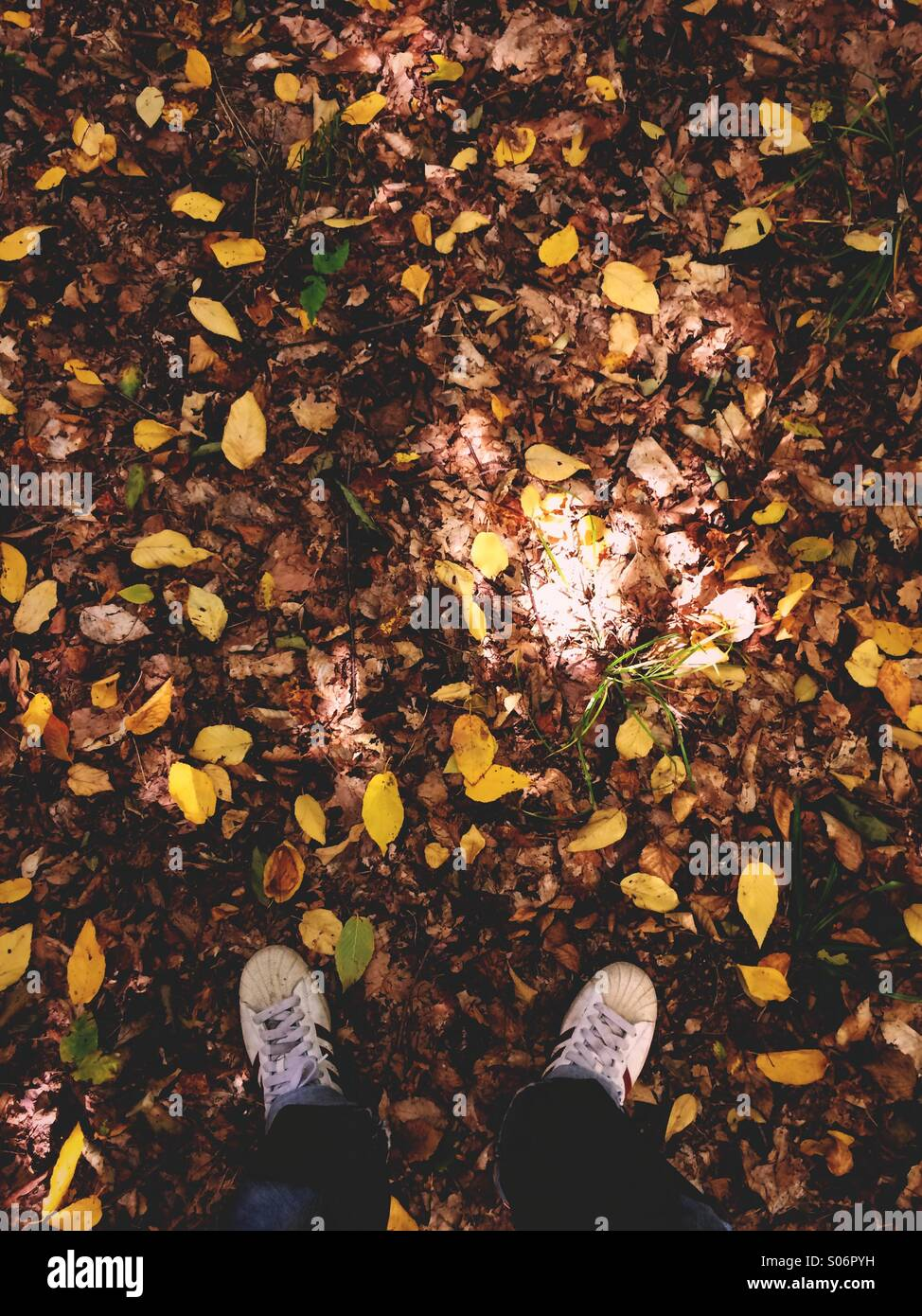 A man's feet standing in fall leaves at the start of autumn. - Stock Image
