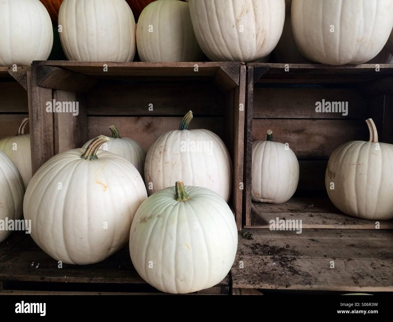 White pumpkins in wooden crates - Stock Image