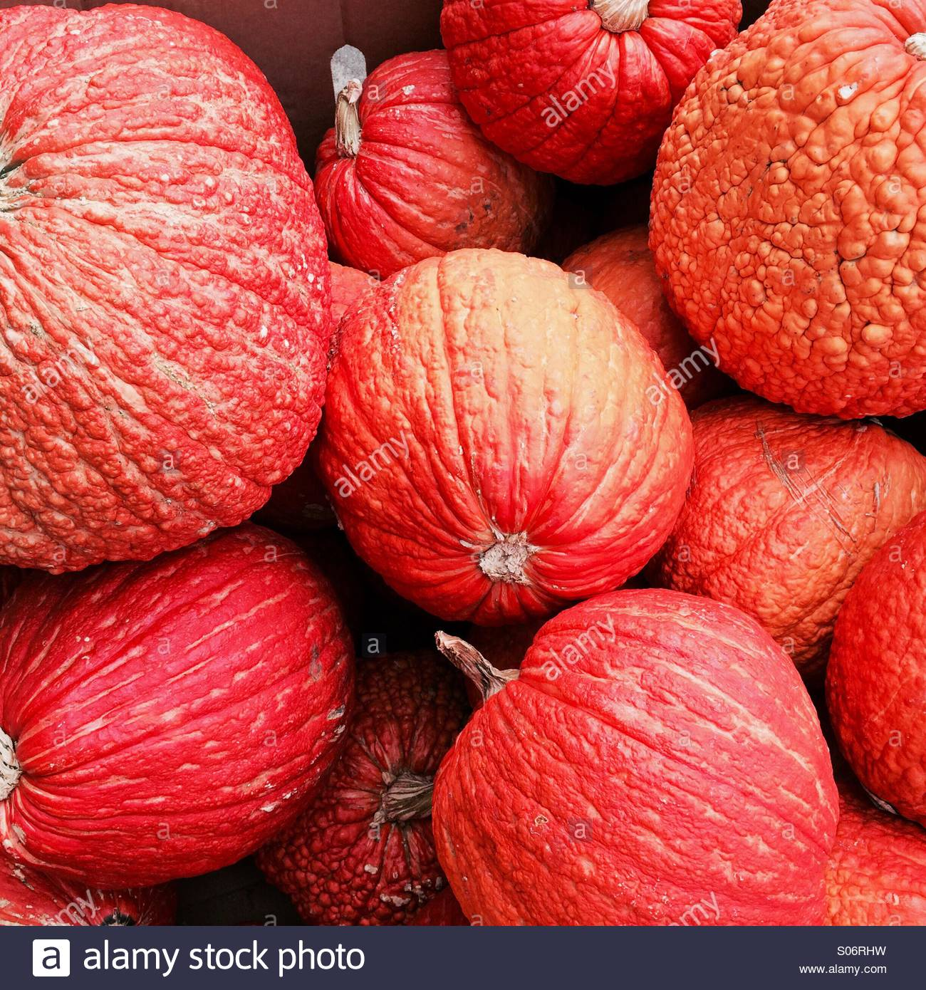 Red warty pumpkins at a roadside stand - Stock Image