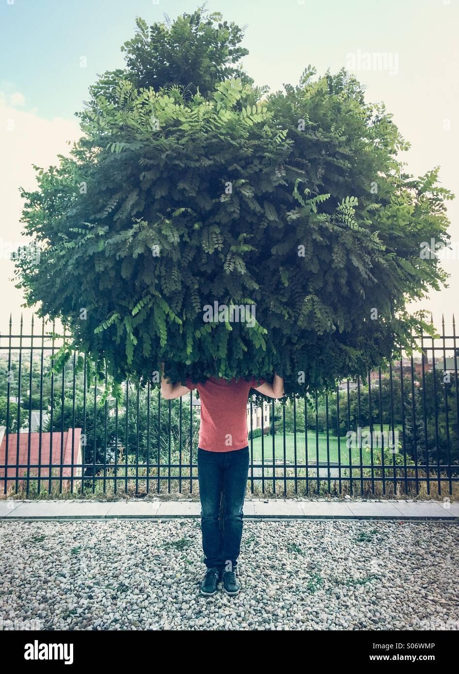 Green Man - Stock Image