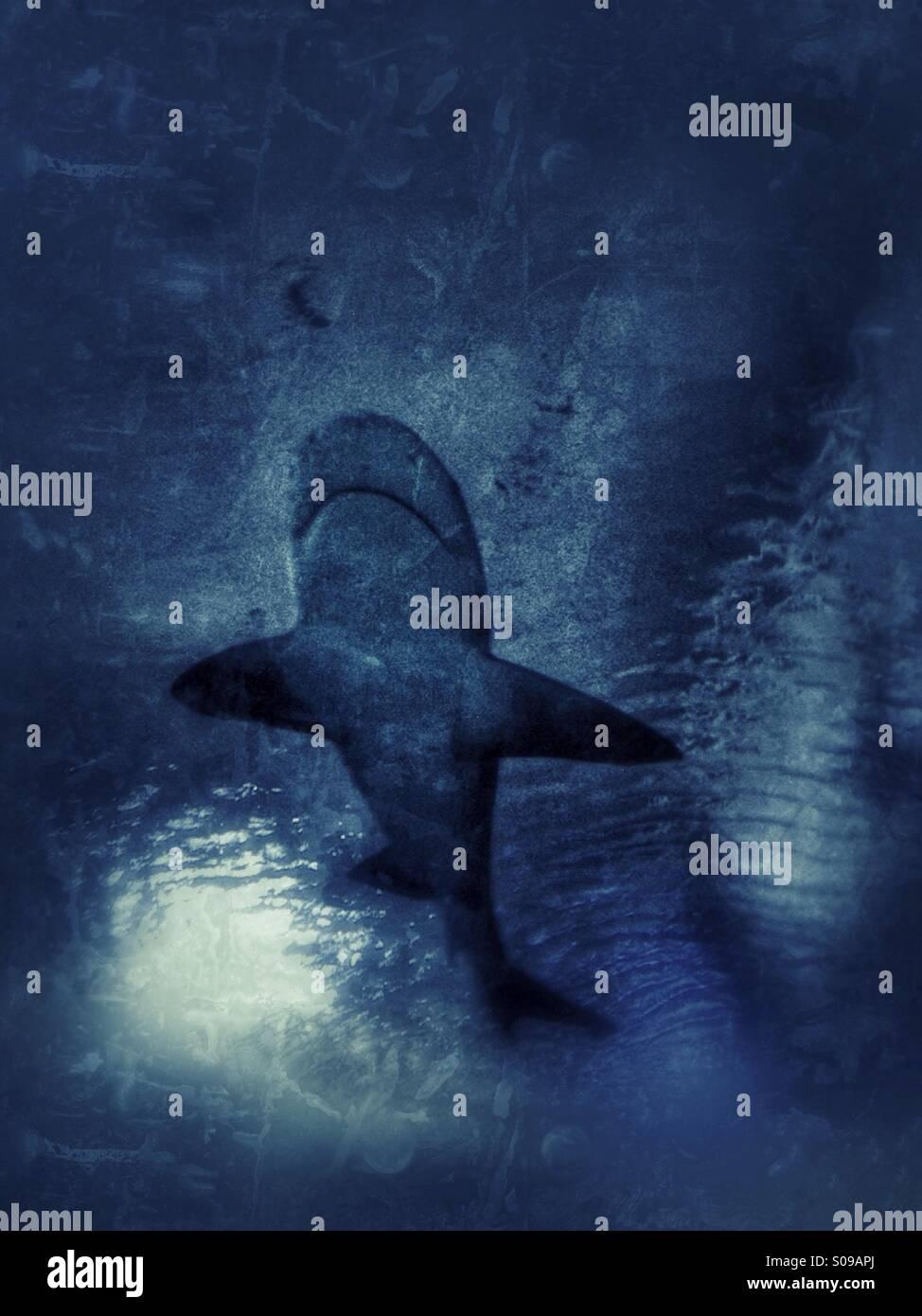 Shark - Stock Image