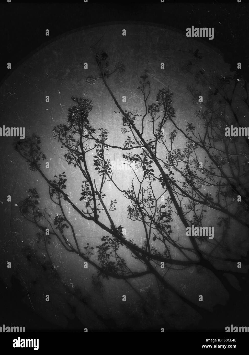 Silhouette of branches, twigs, leaves and flowers on a dark, grungy, distressed moon-like background with a scattering - Stock Image