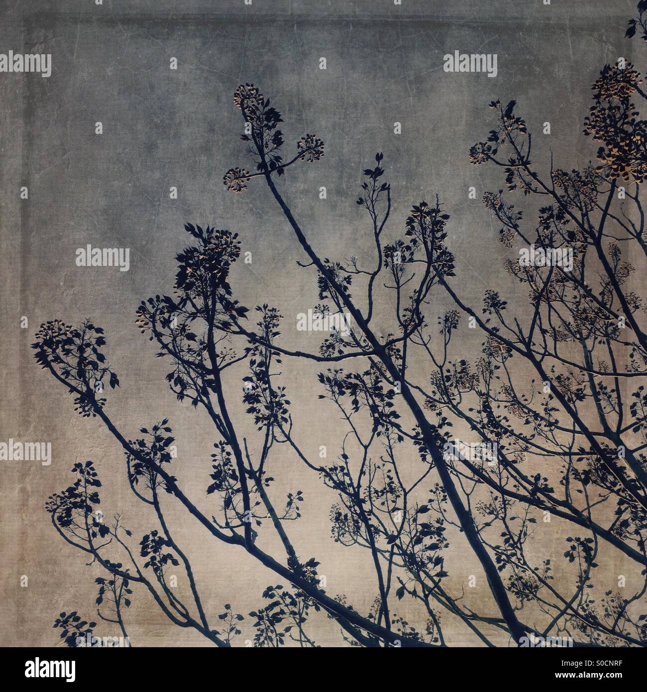Branches, twigs, leaves and flowers with vintage,  cracked paint and paper texture overlay. - Stock Image