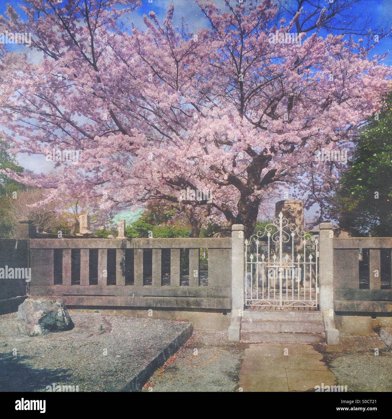Lovely white wrought iron gate to a Japanese cemetery in Spring, within Soji-ji Buddhist temple complex. Taken at - Stock Image