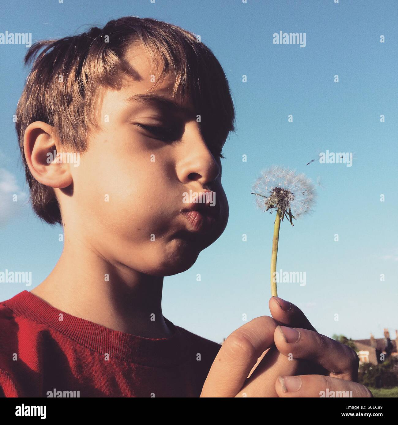 A young boy blowing a dandelion. - Stock Image