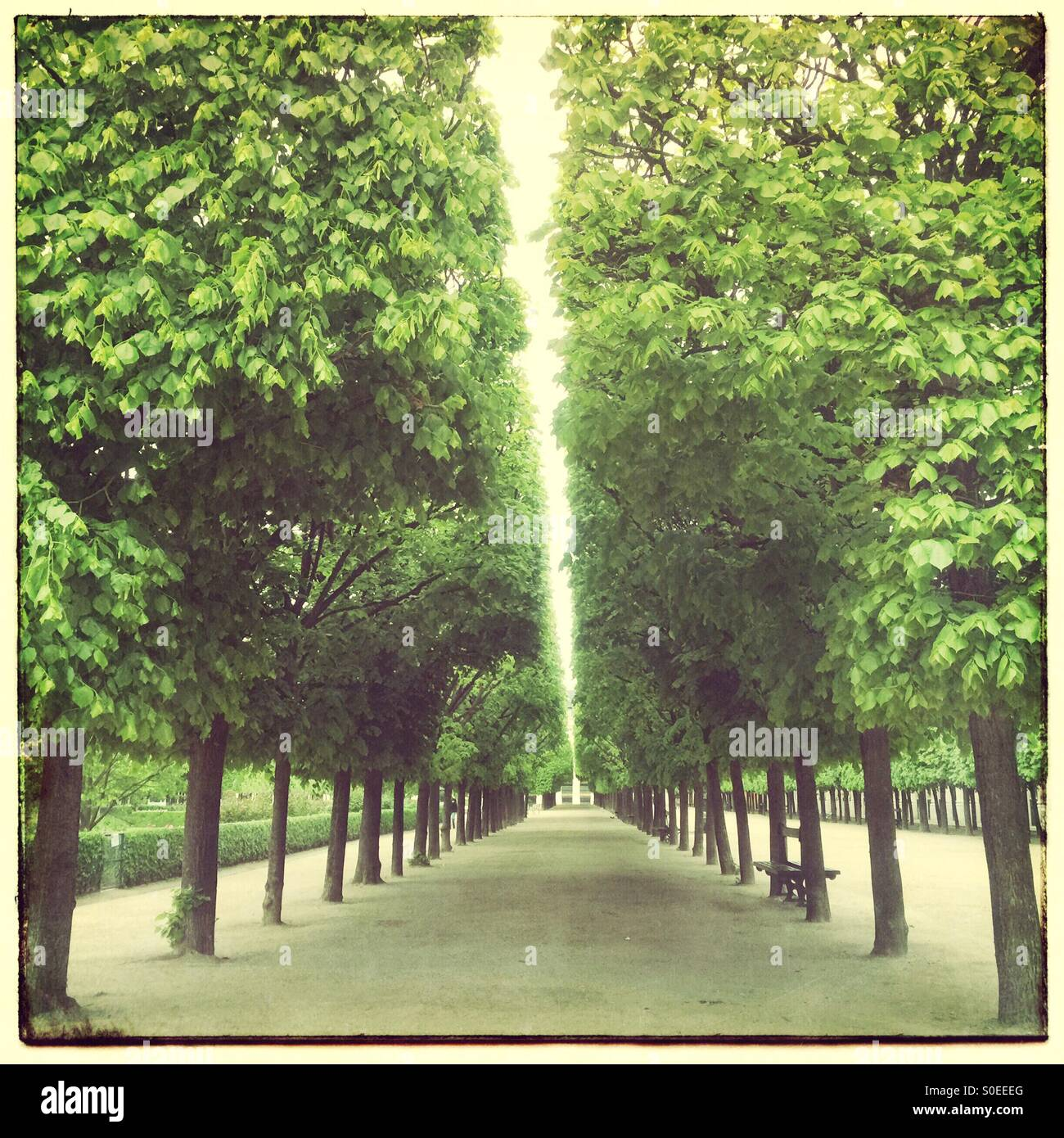 Rows of trees at Jardin du Palais-Royal in Paris, France. Vintage frame and warm, retro, faded look. - Stock Image