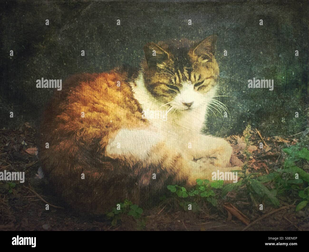 White and brown alley cat sitting in front of a rock and looking sleepy. Vintage painterly texture overlay. Stock Photo