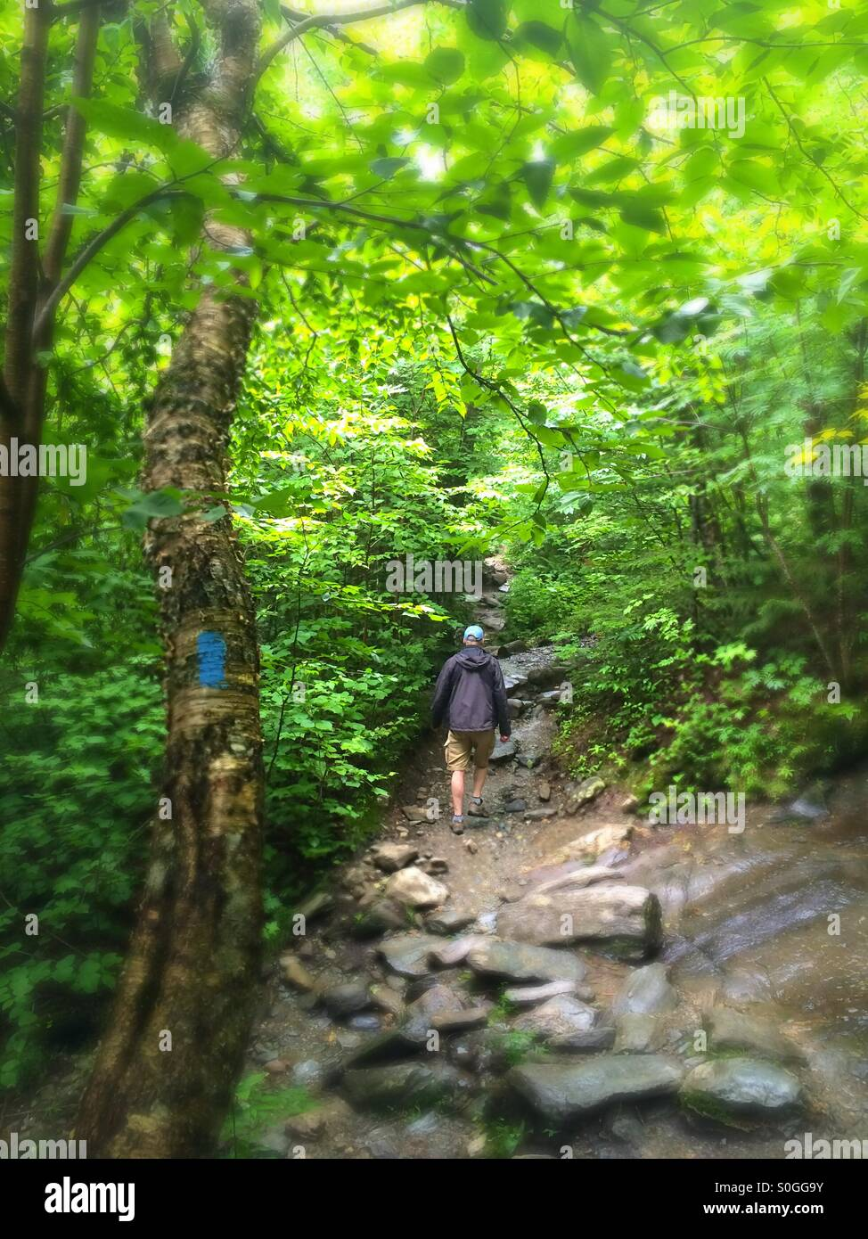 Man hiking on path towards Sterling Pond, Smugglers Notch, Stowe, Vermont - Stock Image