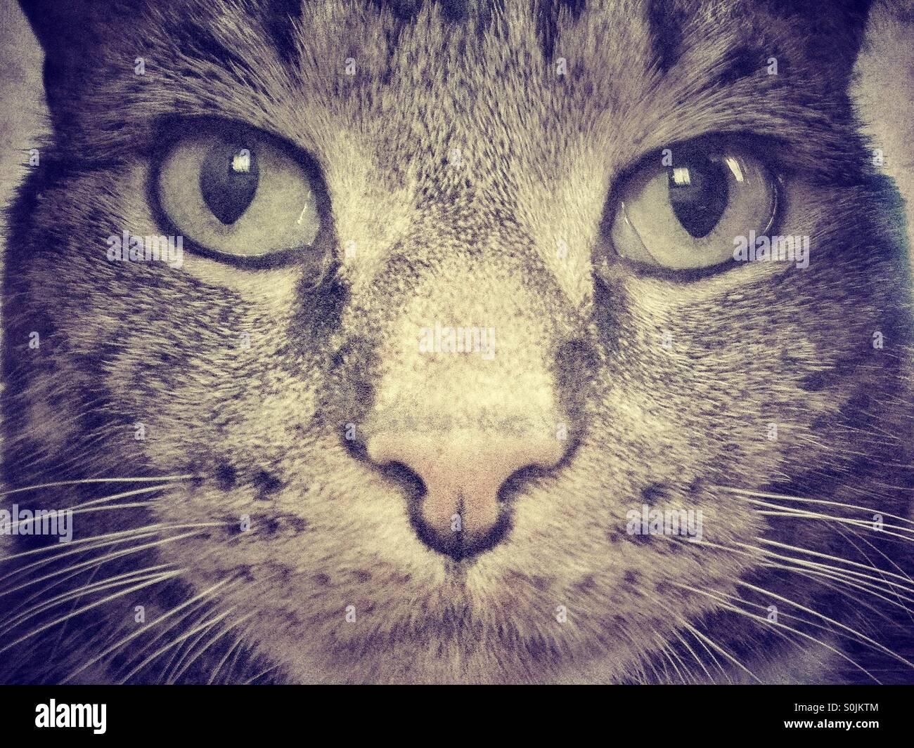 Tabby cat portrait. - Stock Image