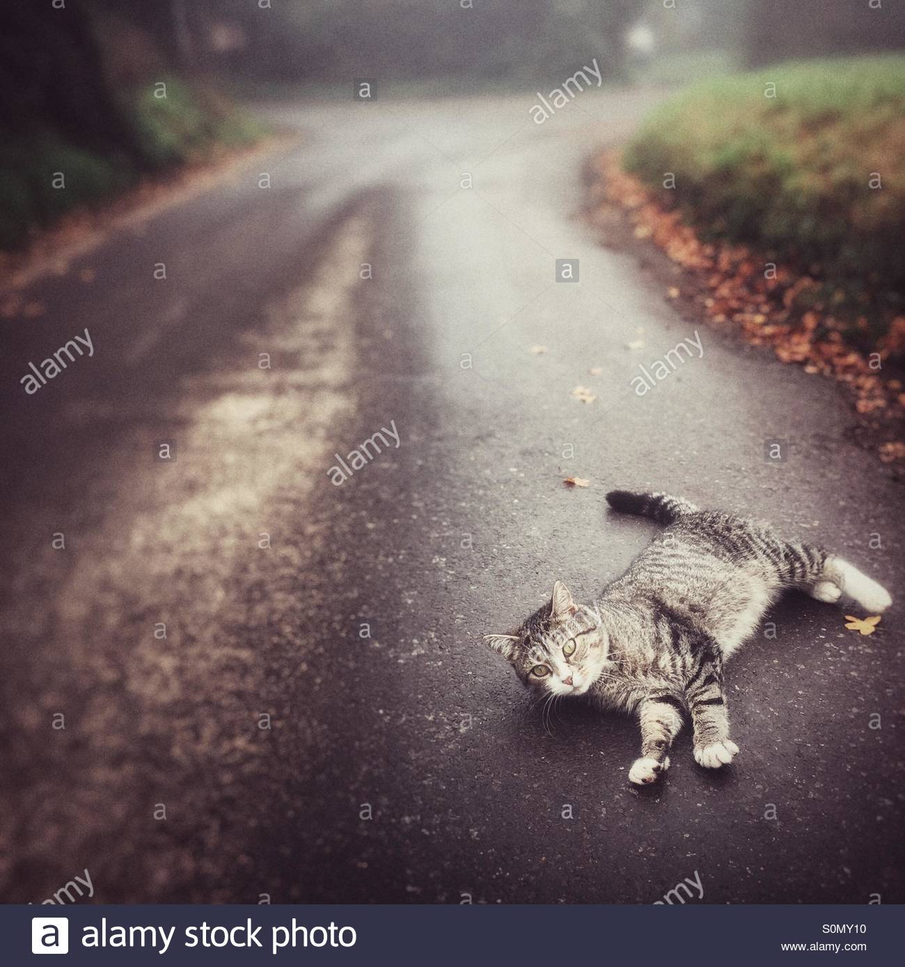 Playful Cat on the Road - Stock Image
