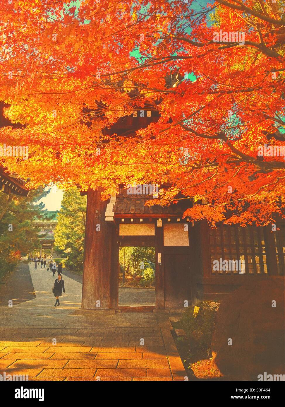 Beautiful fall scene with people and vibrant autumn foliage at Soji-ji Buddhist temple in Yokohama, Japan. Vintage - Stock Image