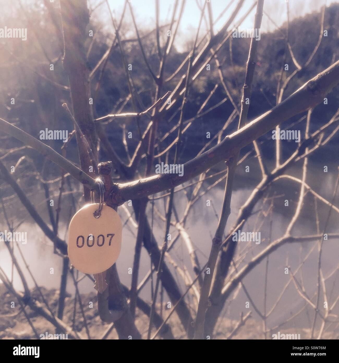 A stainless steel key on simple white oval keychain with the numbers 0007, hanging on a tree branch by the pond Stock Photo