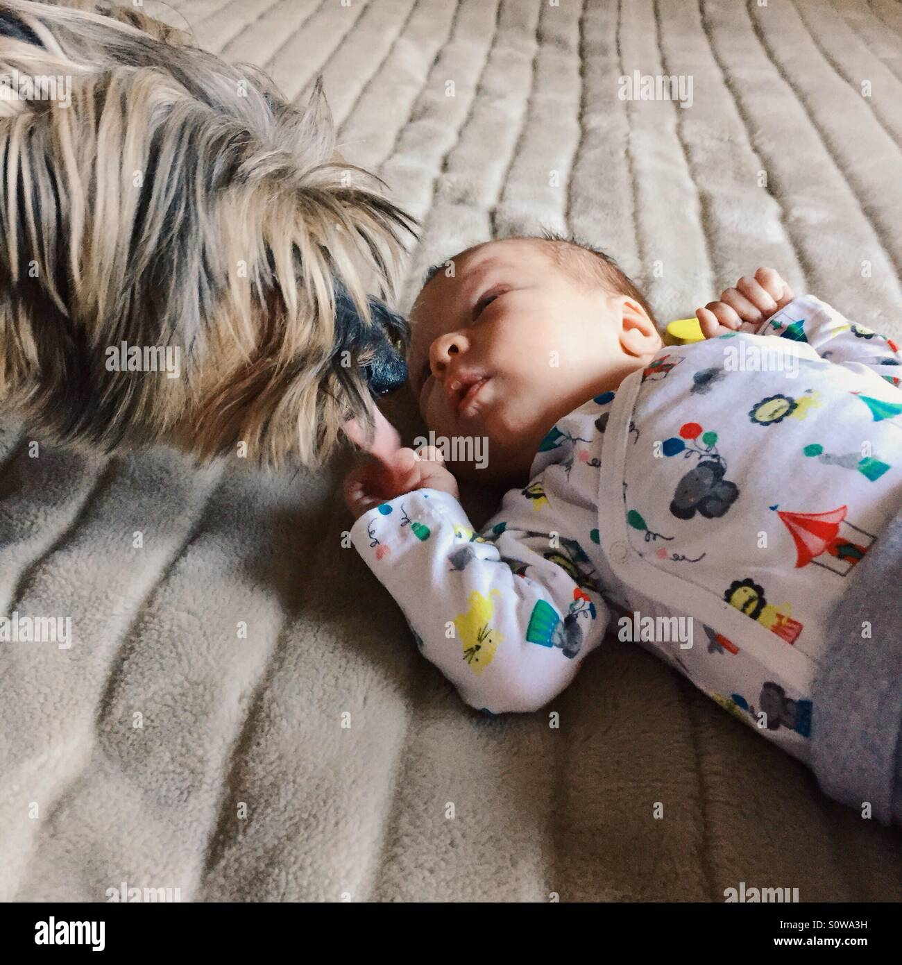 Family pet meets newborn baby - Stock Image