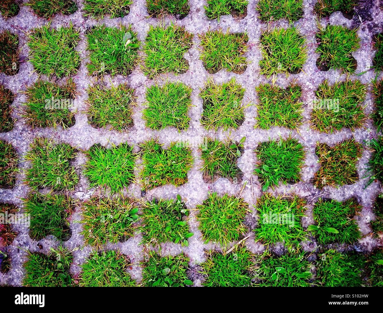 Grassy squares - Stock Image