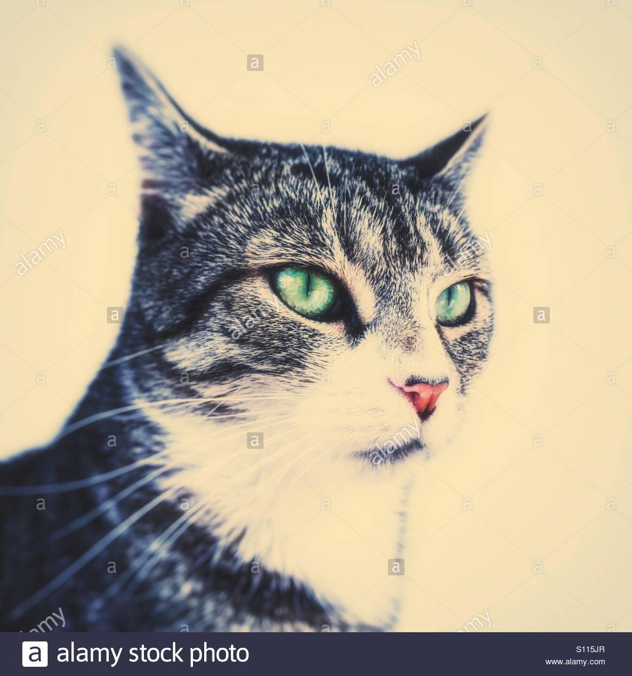 Cat Portrait with 'Pop Art' edit - Stock Image
