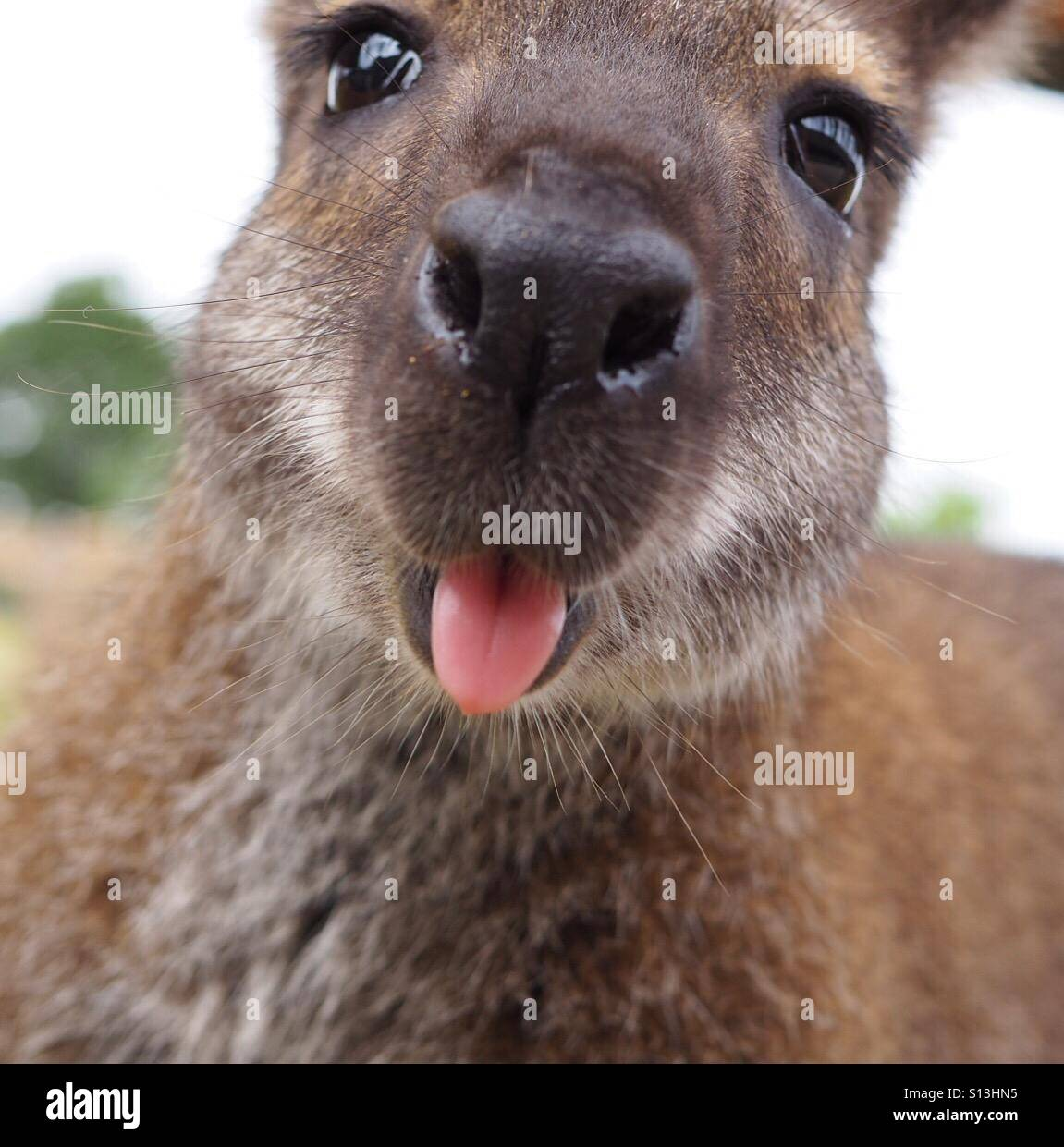 At the Wildlife park. - Stock Image