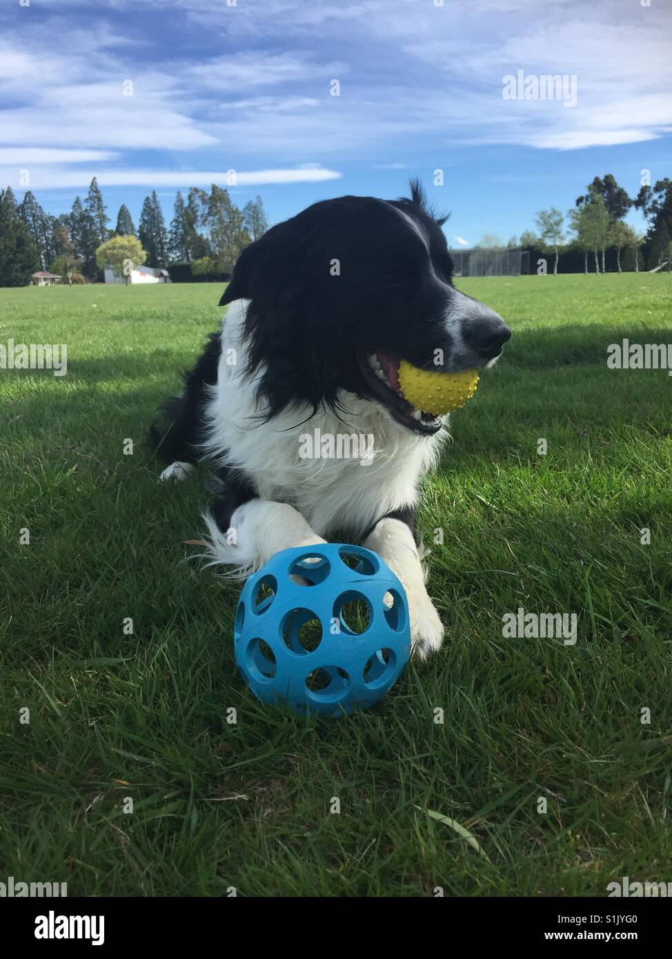 Dog in park with balls - Stock Image