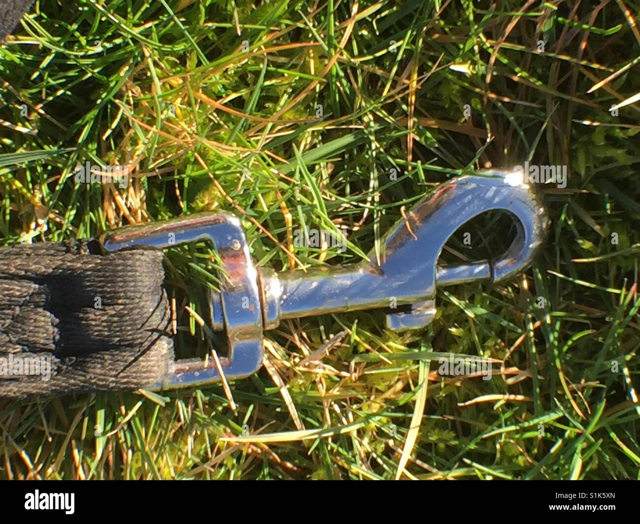 Dog clip in grass - Stock Image