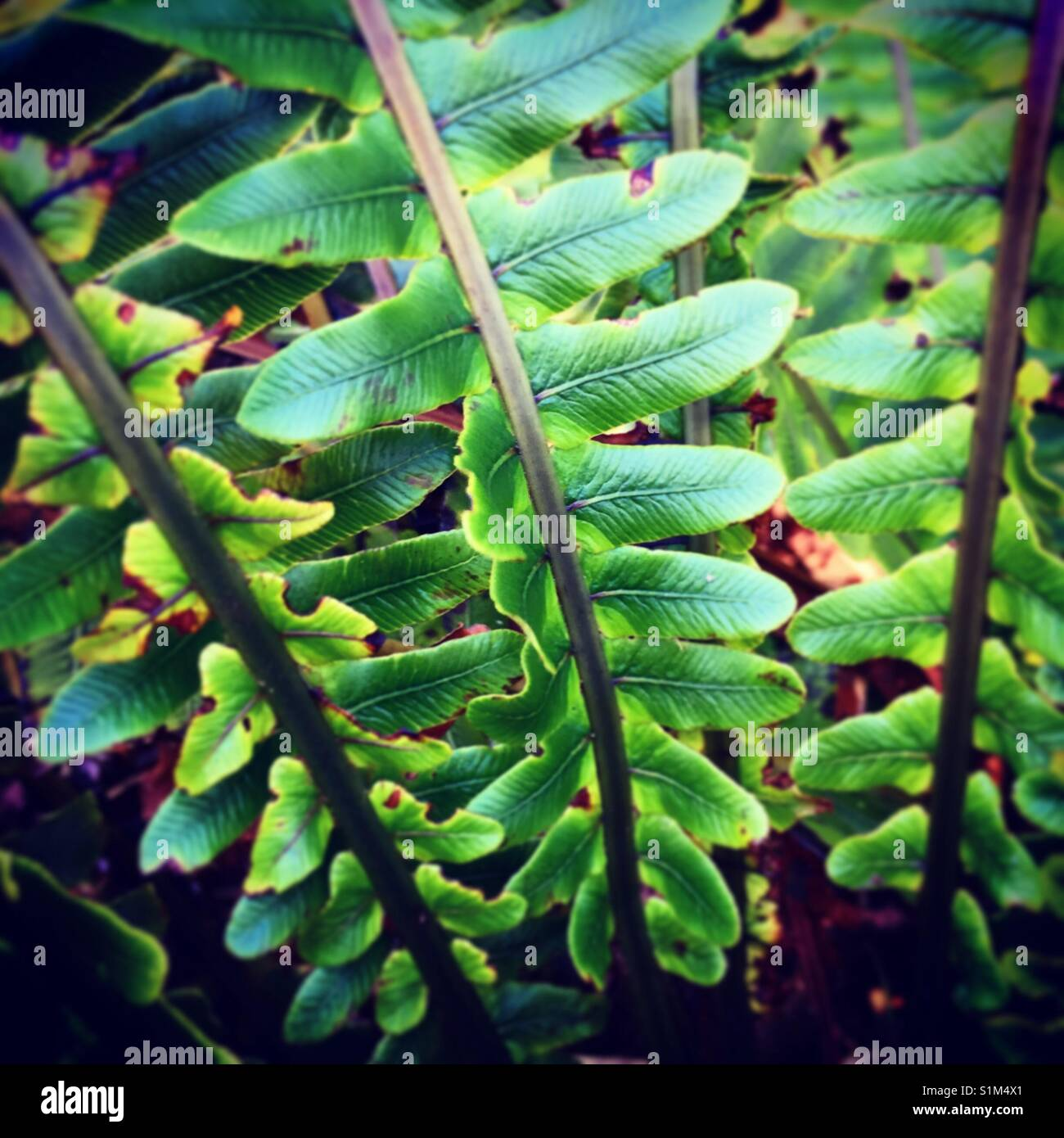Fern frond - Stock Image
