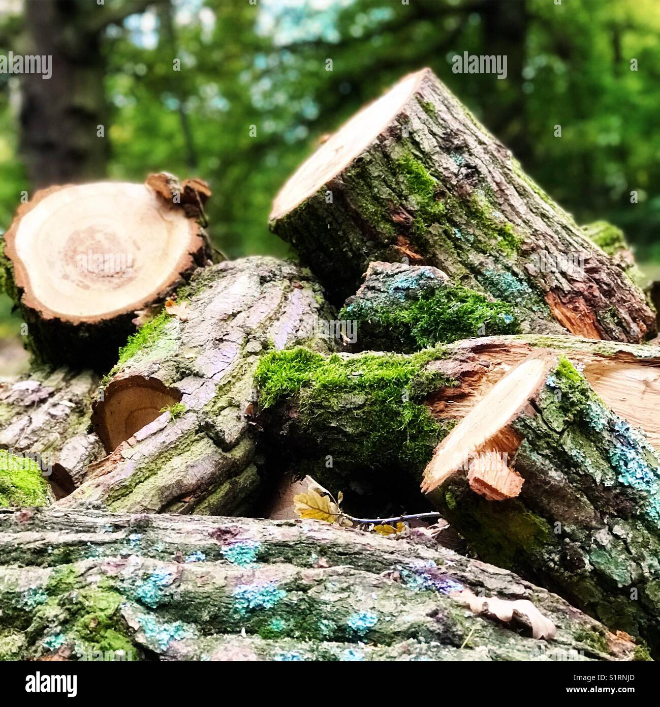 Tree logs - Stock Image