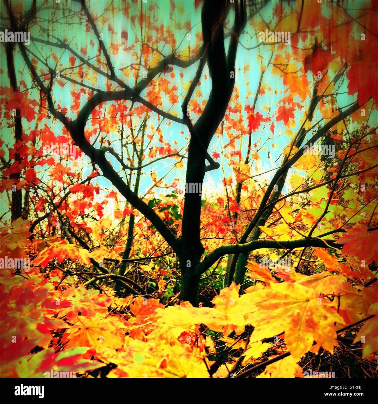 Autumnal tree - Stock Image