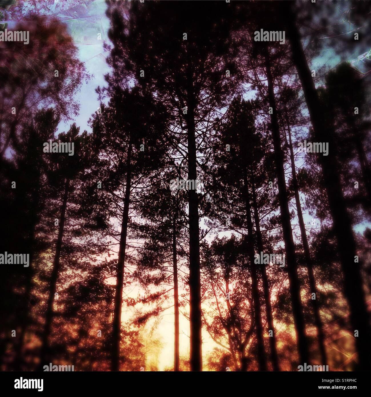 Woodland sunset - Stock Image