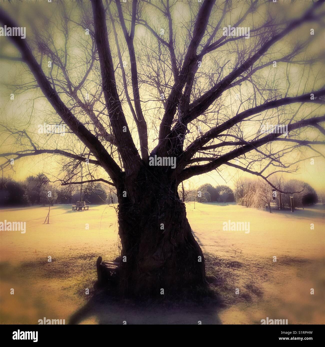 Willow tree silhouette - Stock Image