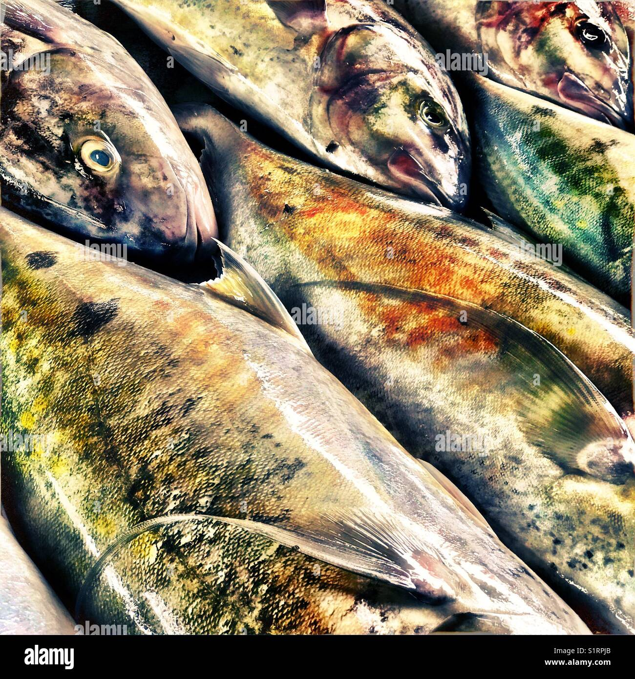 Fish in market - Stock Image