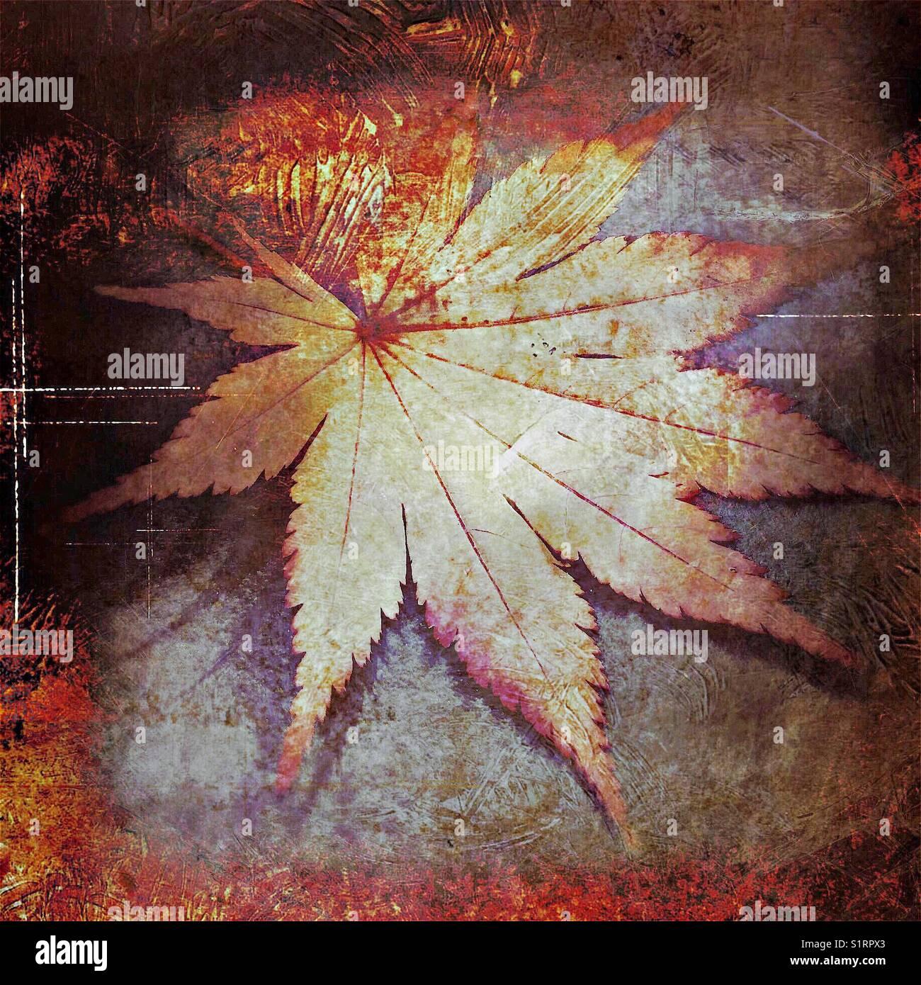 Abstract grunge maple leaf - Stock Image