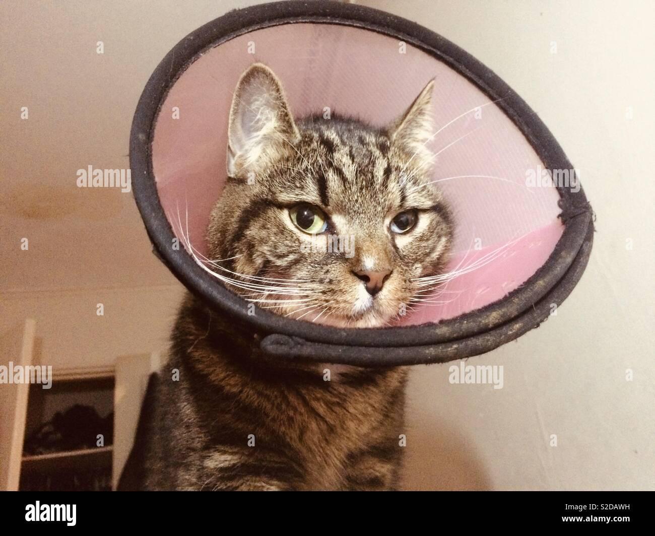 grumpy-cat-in-cone-of-shame-S2DAWH.jpg