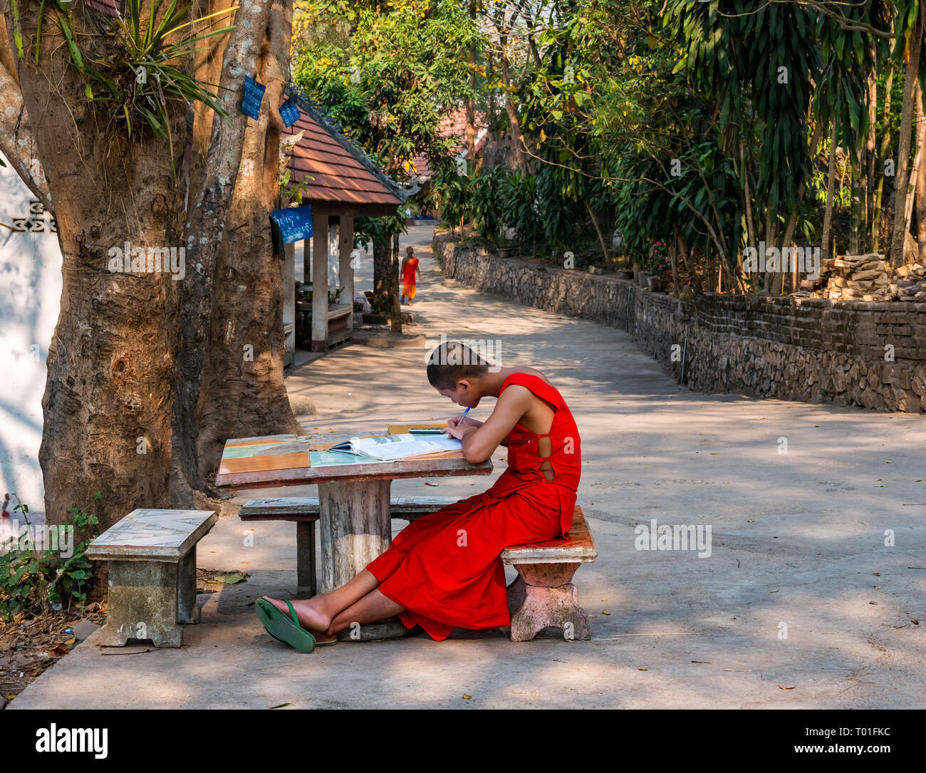 young-buddhist-monk-in-orange-robe-study