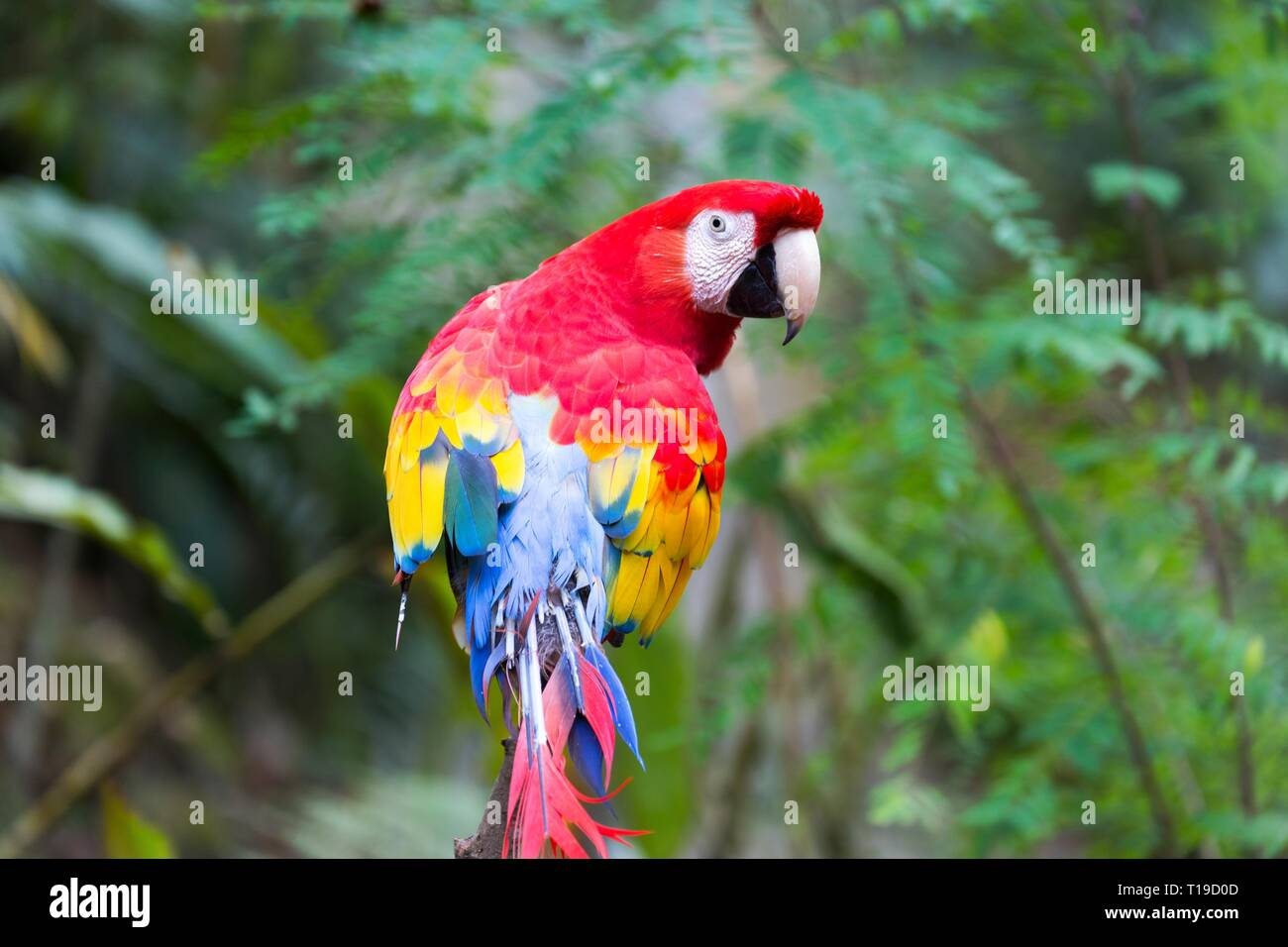 exotic-red-and-yellow-scarlet-parrot-mac