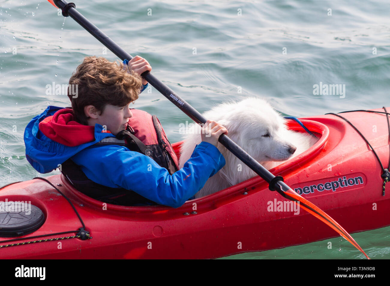 boy-and-his-pet-dog-kayaking-or-canoeing-T3N9DB.jpg